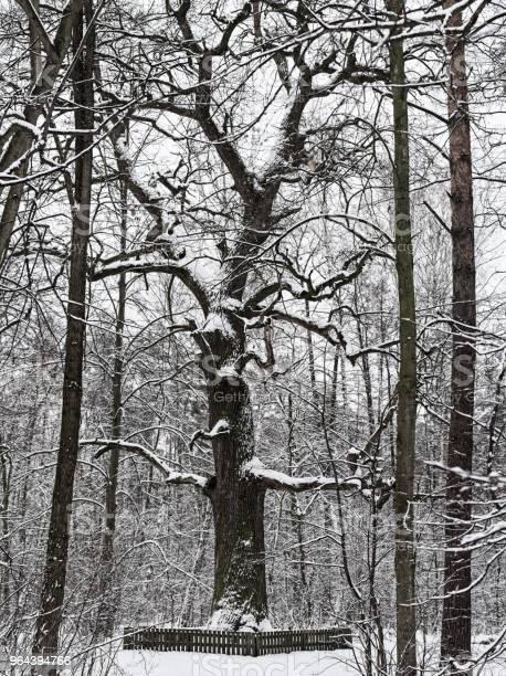Foto de Winter Park Com Carvalho e mais fotos de stock de Brilhante - Luminosidade