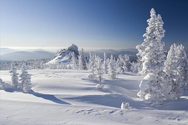 winter park with snow with clear sky - siberië stockfoto's en -beelden