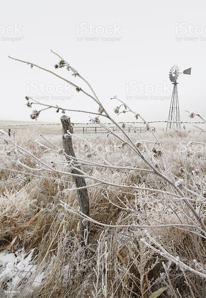winter pasture royalty-free stock photo