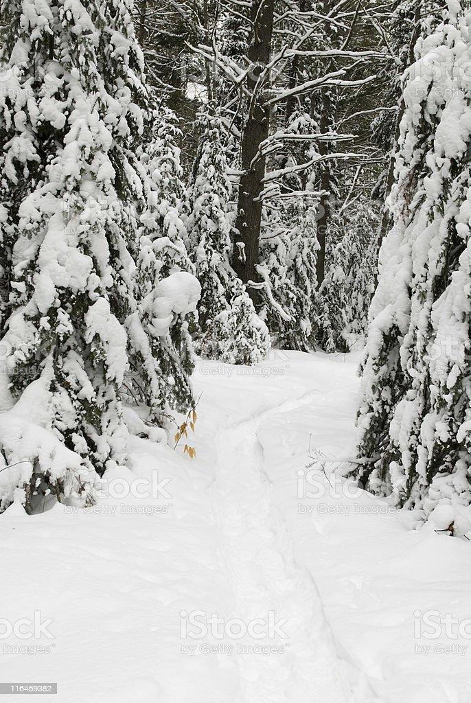 Winter Path 3 stock photo