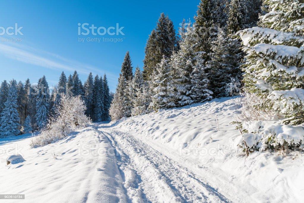 Winter path in Beskid Sadecki Mountains on sunny day, Poland stock photo
