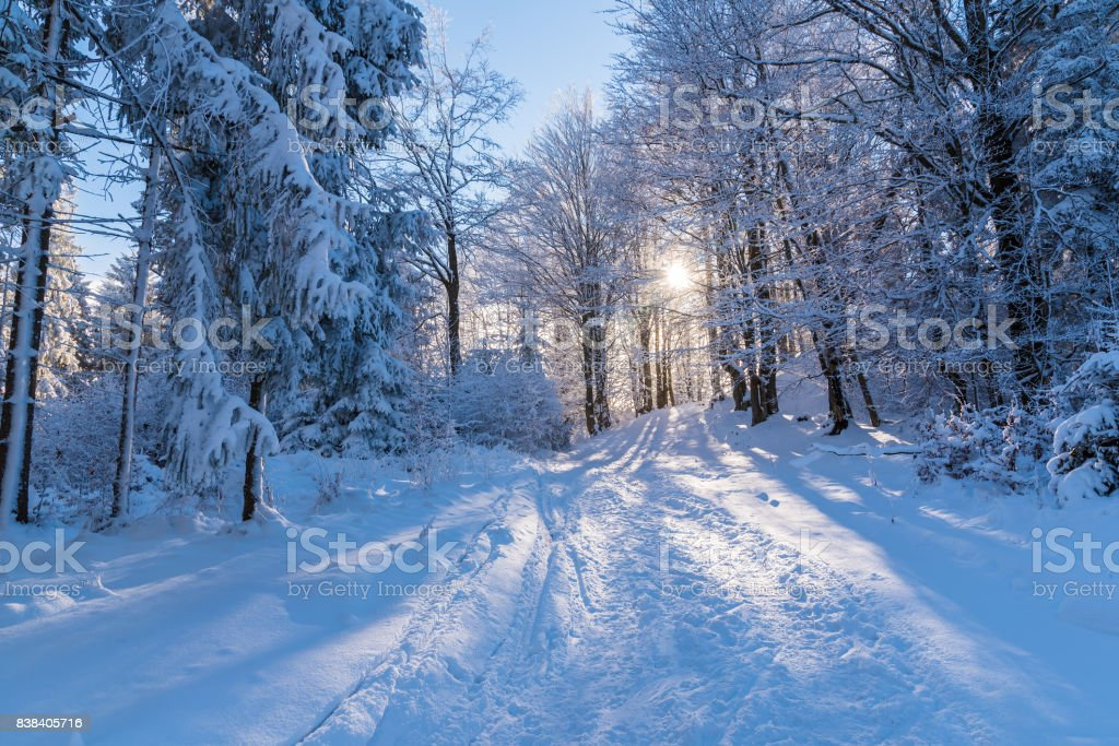 Winter path in forest with sun shining through trees, Beskid Sadecki Mountains, Poland stock photo