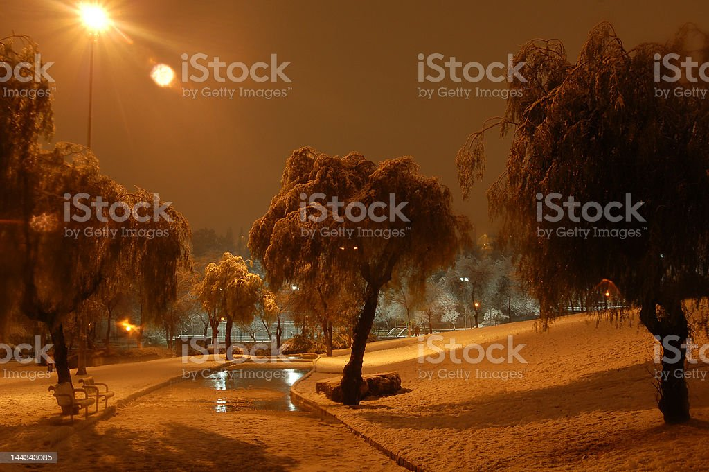 Winter path in night and trees under snow royalty-free stock photo