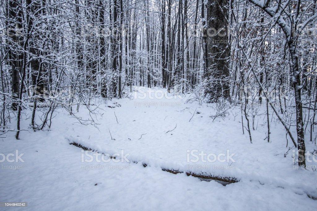 Winter Pad Wind Door Een Donker Michigan Bos Stockfoto En Meer Beelden Van Achtergrond Thema Istock