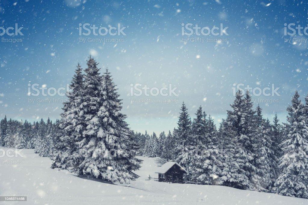 Winter-Perfektion – Foto