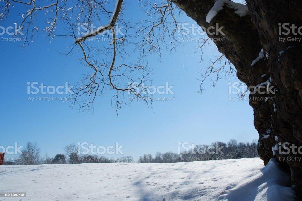 겨울 스톡 사진