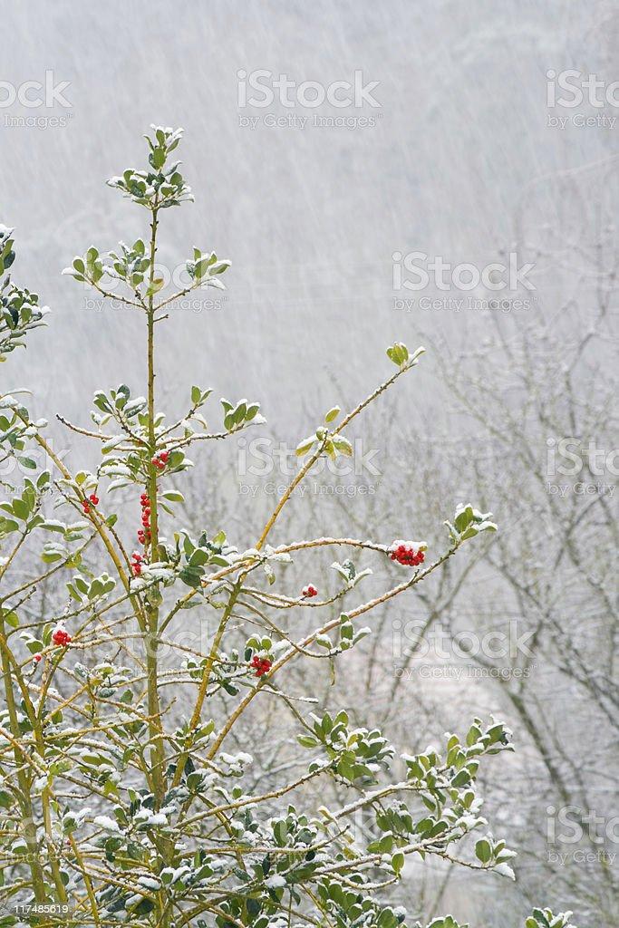 winter royalty-free stock photo
