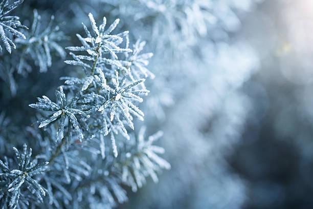winter - januari bildbanksfoton och bilder