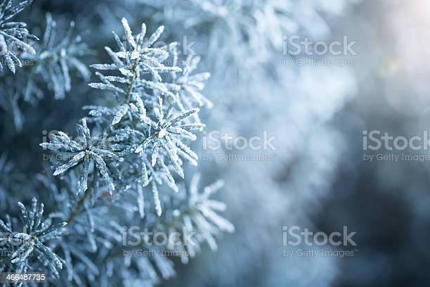 Photo of Winter