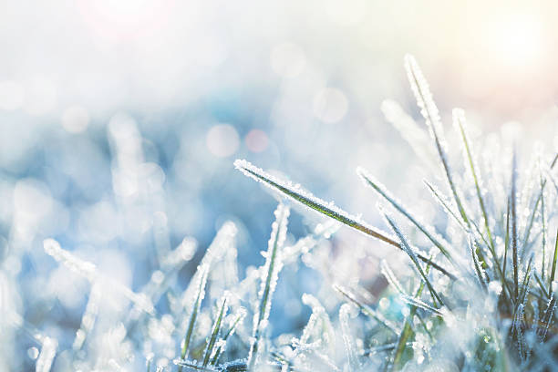 winter - frost stock photos and pictures