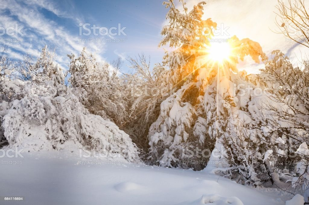 Winter. foto stock royalty-free