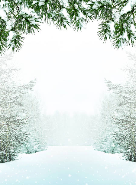 winter - non urban scene stock pictures, royalty-free photos & images