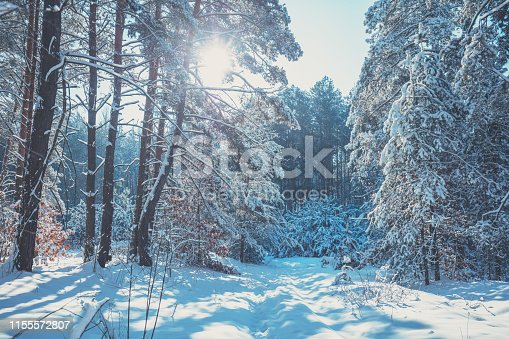 1061644120 istock photo Winter pine forest covered with the deep snow. Pine trees covered with snow. Winter nature. Nature winter background. Christmas background 1155572807