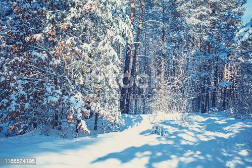 1061644120 istock photo Winter pine forest covered with the deep snow. Pine trees covered with snow. Winter nature. Nature winter background. Christmas background 1155574195