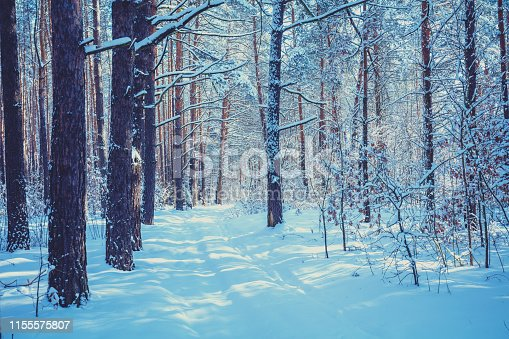 1061644120 istock photo Winter pine forest covered with the deep snow. Pine trees covered with snow. Winter nature. Nature winter background. Christmas background 1155575807