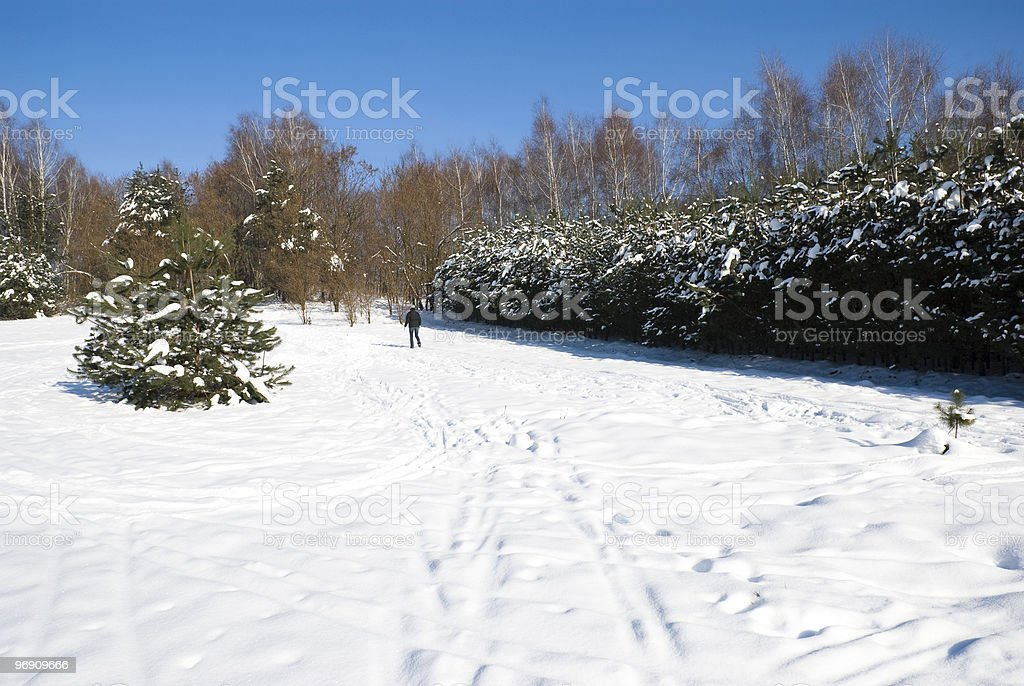 Winter Pine royalty-free stock photo