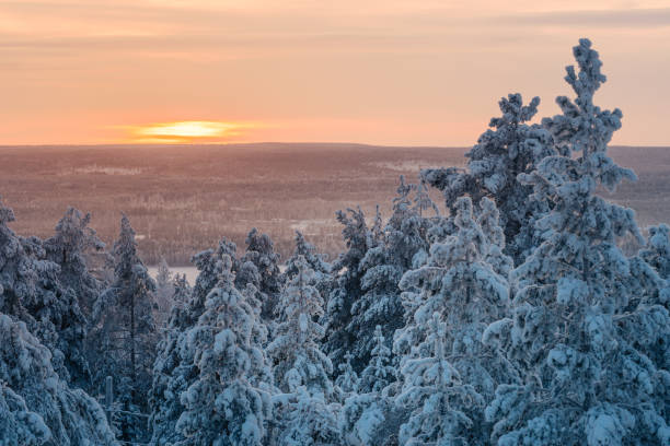 Winter pine trees with snow at sunset stock photo