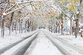Winter Platanus street