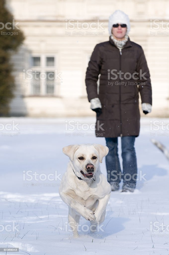 Winter playing with dog royalty-free stock photo