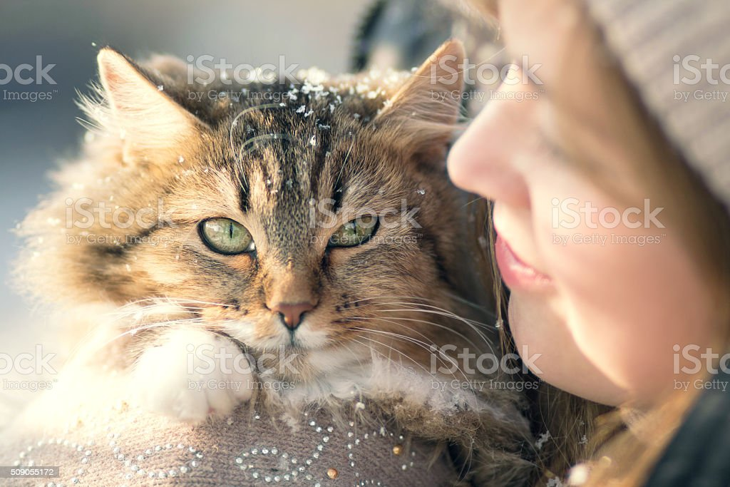 Winter portrait of a woman with a cat stock photo