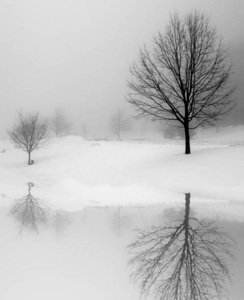 Winter Reflection stock photo