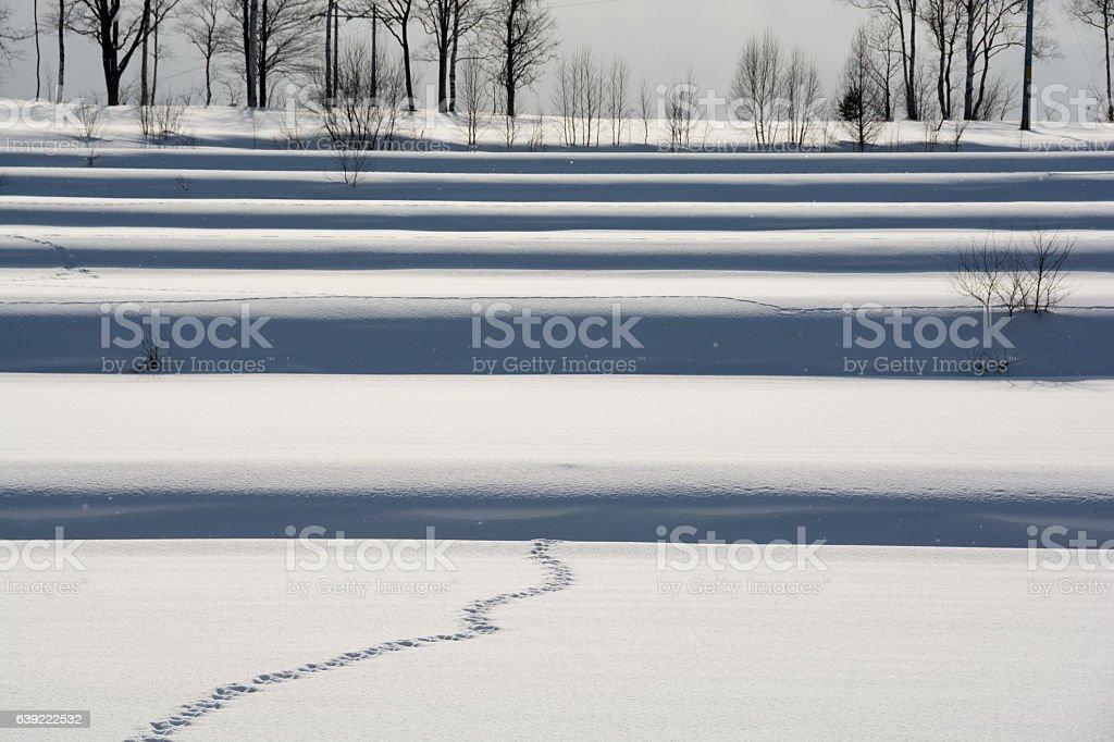 Winter rice paddy stock photo