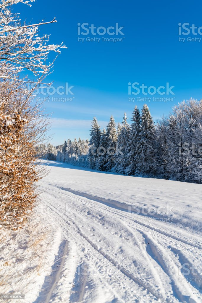 Winter road and trees covered with fresh snow in Beskid Sadecki Mountains, Poland stock photo