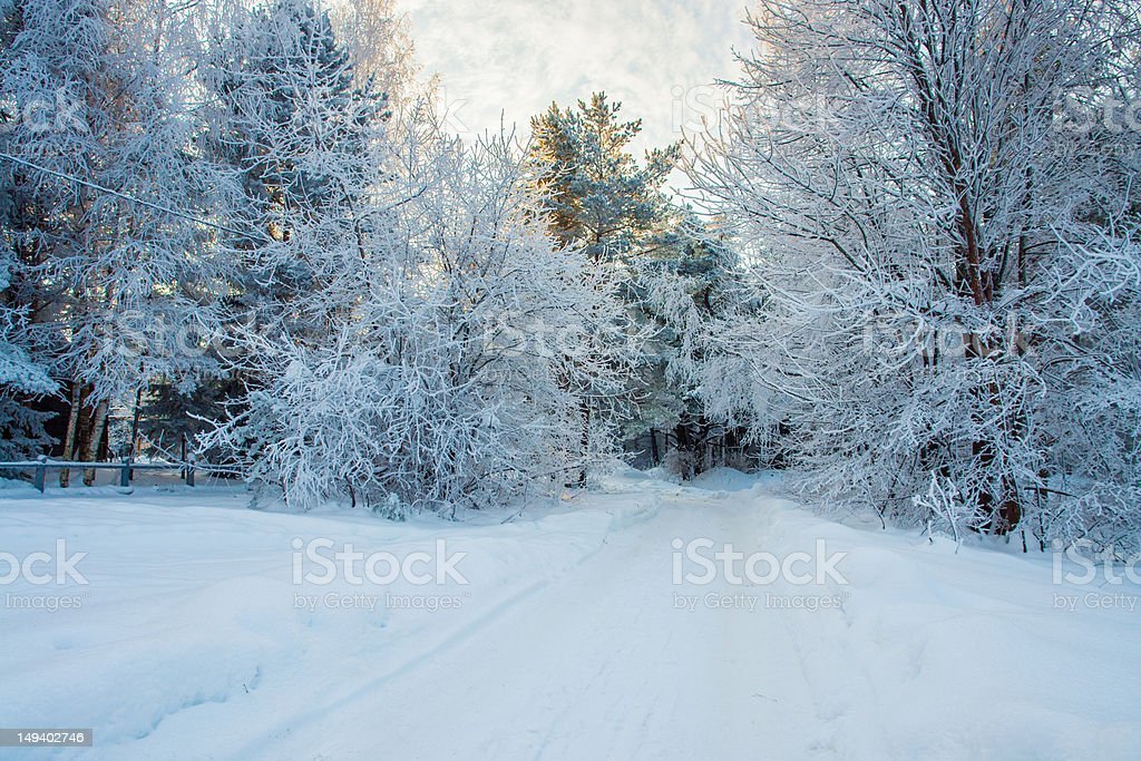 Winter road in the fairy-tale forest royalty-free stock photo