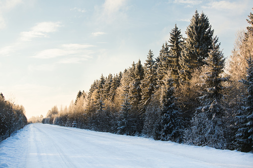Winter road through the forest