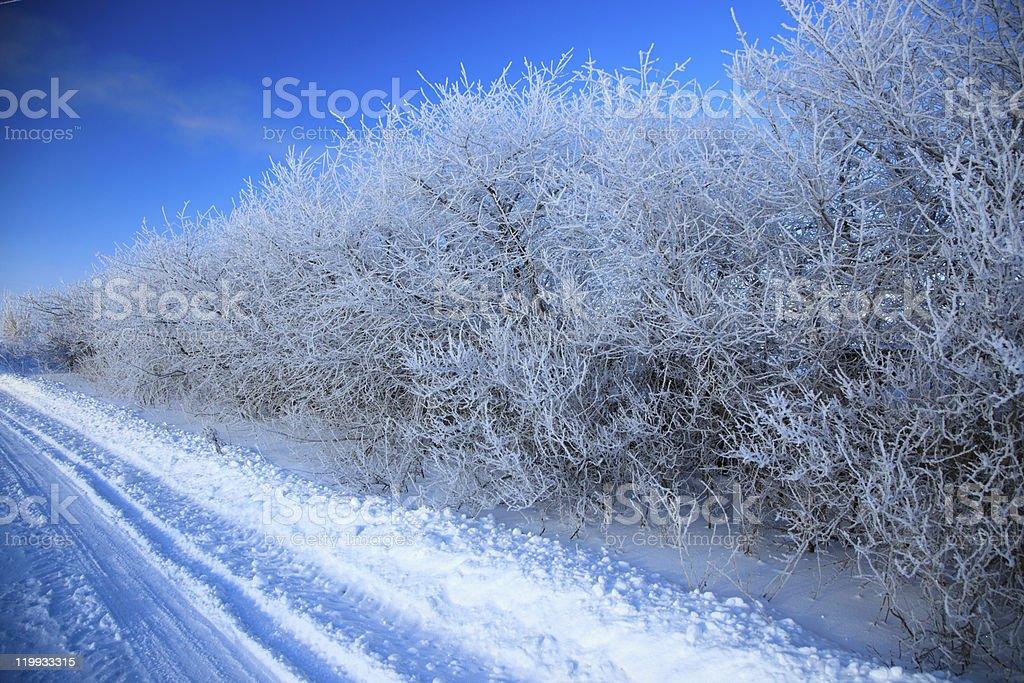 Winter rural landscape. stock photo