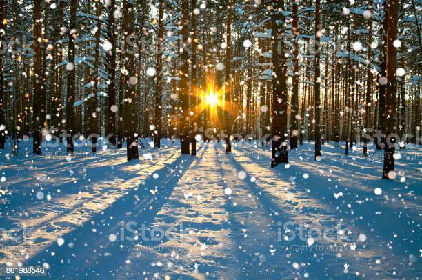 Photo of winter rural landscape with forest, sun and snow