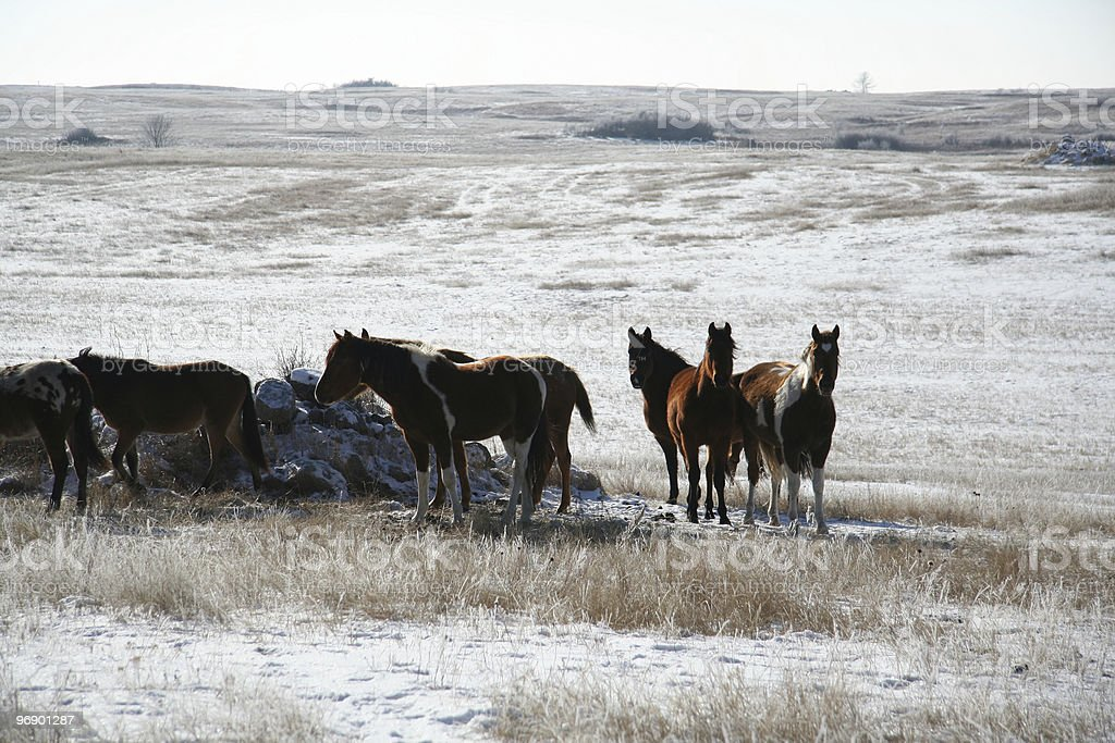 Winter Scape Horses backlite royalty-free stock photo