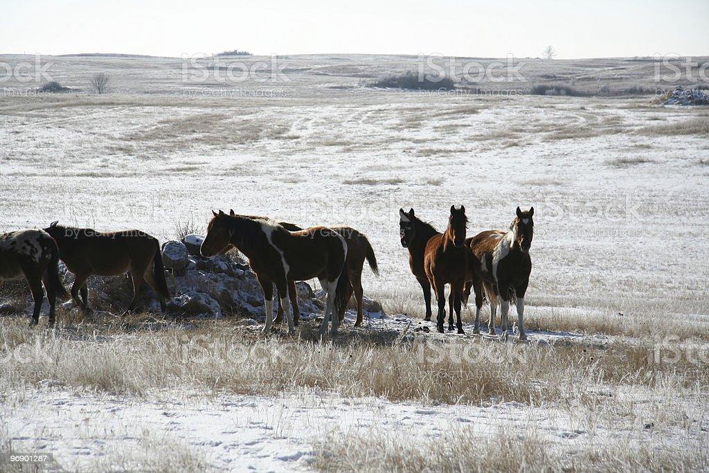 Winter Scape Horses backlite stock photo