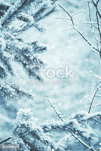 Winter scene - snow falling on frosted pine branches covered with snow on blurred background