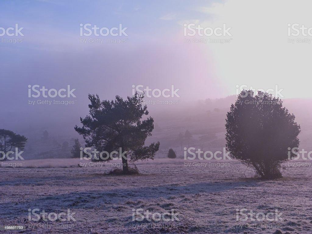 Winter Scene in The Ashdown Forest stock photo
