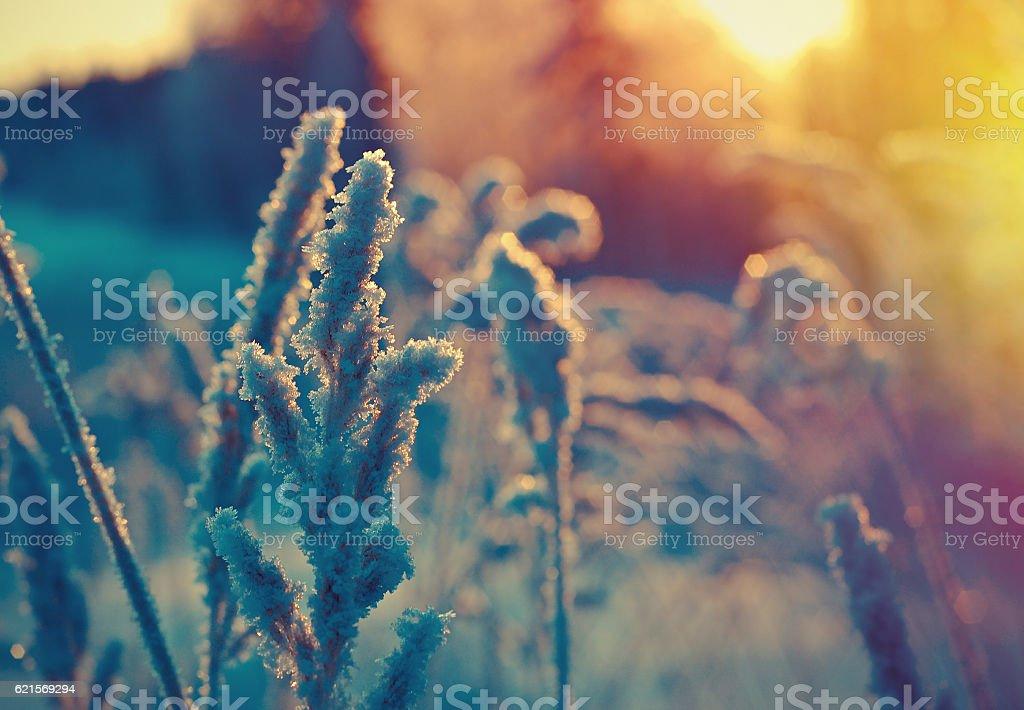 Winter scène  photo libre de droits