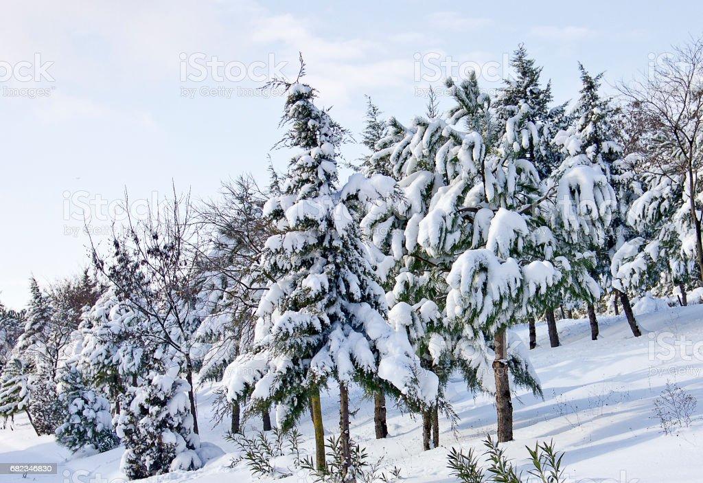 Winter scene zbiór zdjęć royalty-free