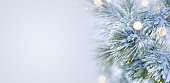 Winter scene - Snow covered pine tree with Christmas lights