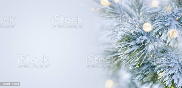 Winter scene snow covered pine tree with christmas lights picture id933914554?b=1&k=6&m=933914554&s=612x612&h=g avv 0o0jnpdnulnbwsfvppstue 8 wddpiihlbtyw=