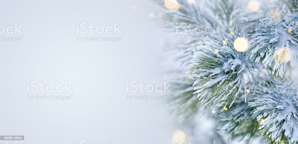 Winter scene - Snow covered pine tree with Christmas lights stock photo