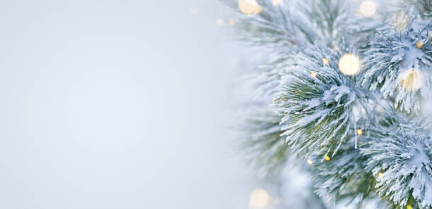winter scene - snow covered pine tree with christmas lights - christmas green stock photos and pictures
