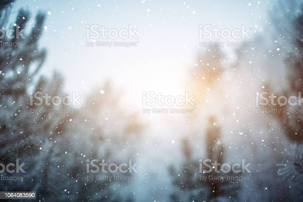 Winter scene snowfall in the woods picture id1064083590?b=1&k=6&m=1064083590&s=612x612&h=pflypfvntmiezfnv5 chzdbnn0 mwsloy4u4knsm1ge=