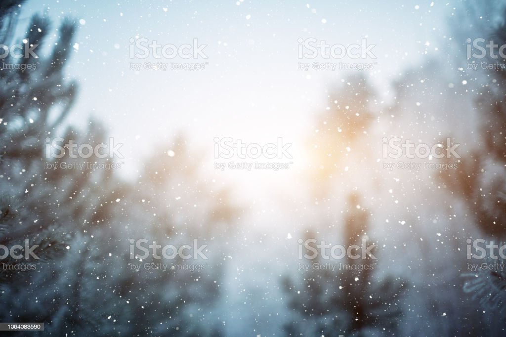 Winter scene - snowfall in the woods stock photo