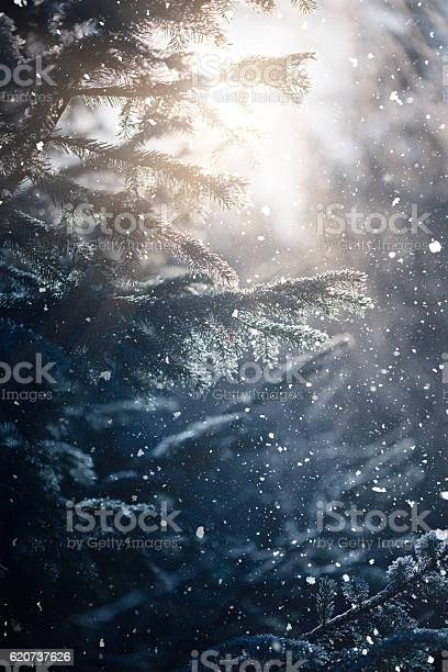 Photo of Winter scene - snowfall in the woods