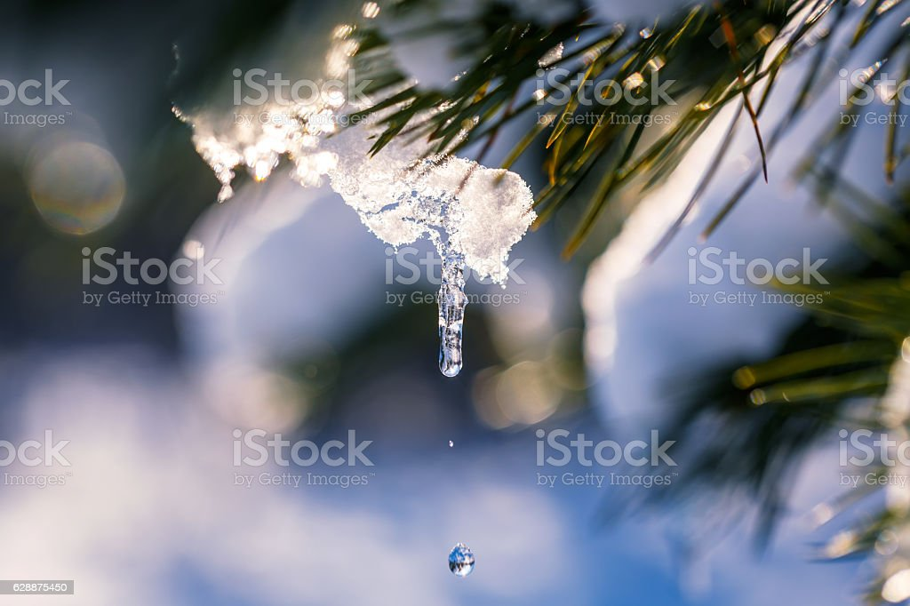 Winter scene. Thaw stock photo