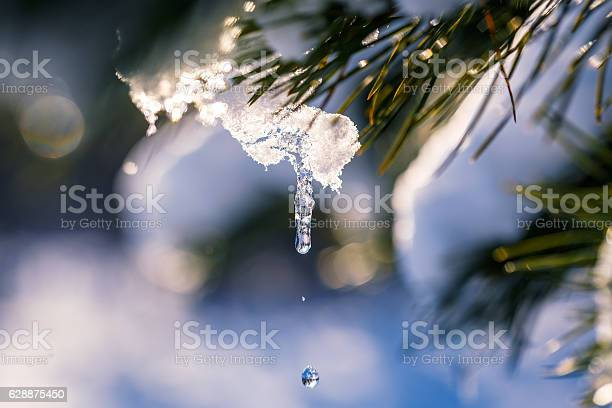 Photo of Winter scene. Thaw