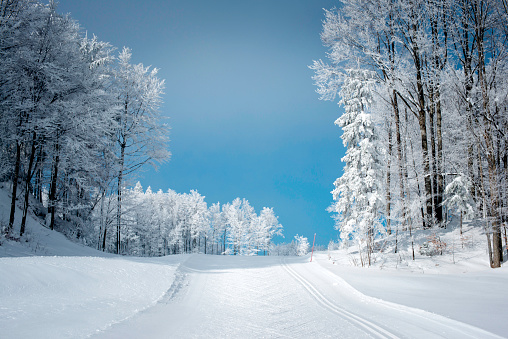 Winter Scene with Cross-Country Skiing Track in Julian Alps