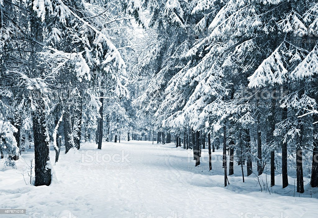 Winter scene with snow on the ground and in the trees stock photo