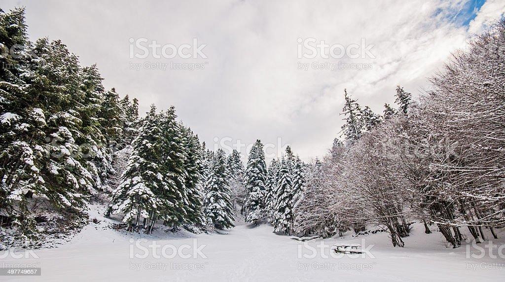 Abant 숲 볼루 - 로열티 프리 0명 스톡 사진