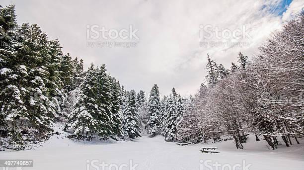Abant 숲 볼루 0명에 대한 스톡 사진 및 기타 이미지